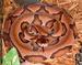 Agkistrodon contortrix contortrix snake